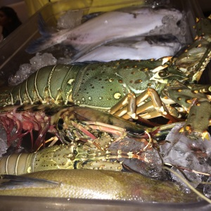 Lobsters, tiger prawns , fresh water fishes